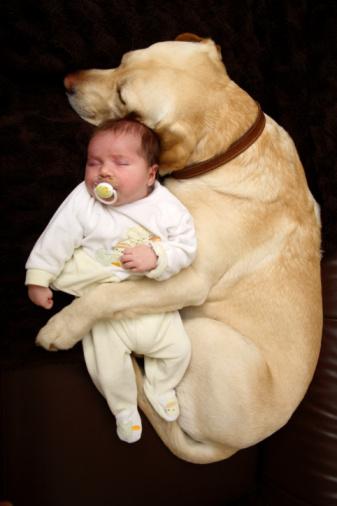 dog&baby