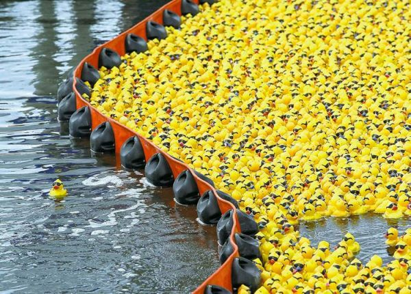 DUCK RACE  TOPIX