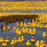 rubber-ducks-go-whitewater3