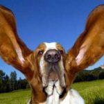 idioms_ear4