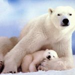 polar-bearsmom-n-sleepingbaby