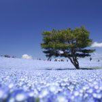 Приморский парк Хитачи, Япония