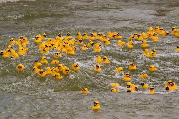 rubber-ducks-go-whitewater5