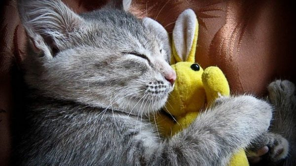 Спросите у экспертов Как будить кота