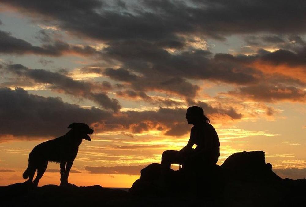 Картинки путников с собакой